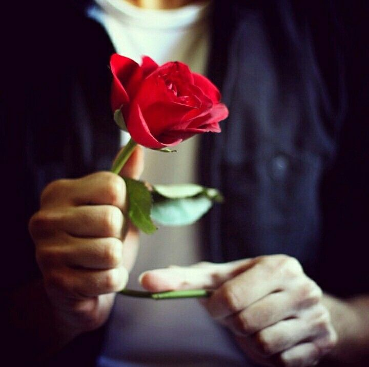 Boy with rose dp whatsapp